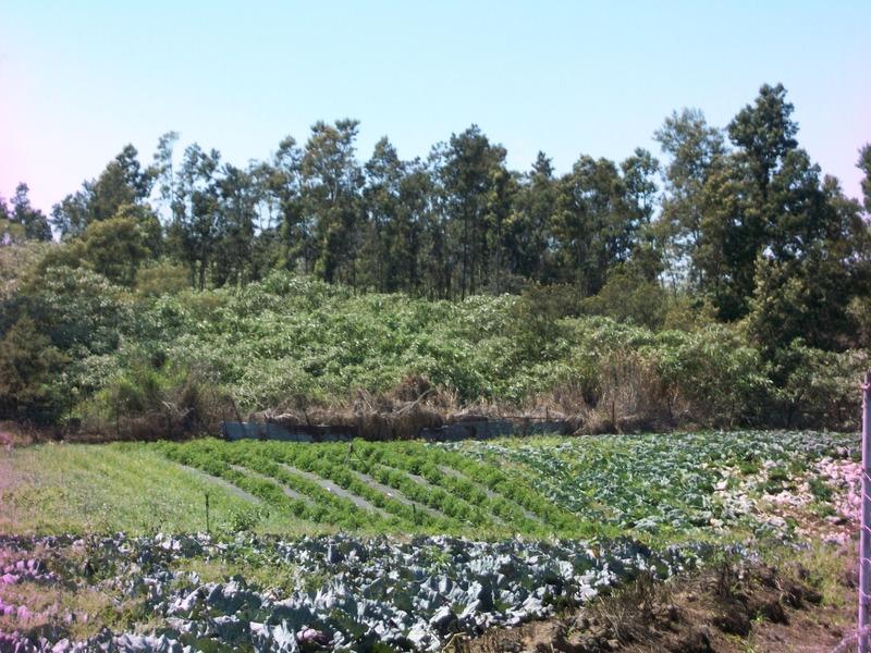 Terrain agricole de   m2 - Le Tampon (97430)