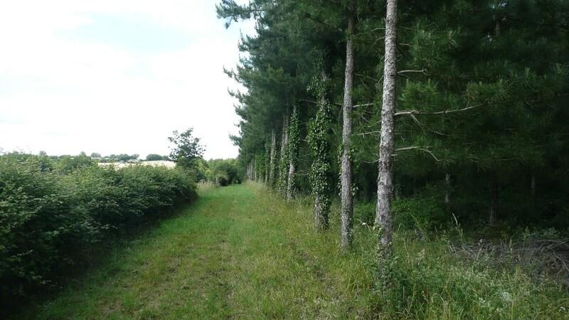 Propriété forestière de 1  m2 - Candé (49440)