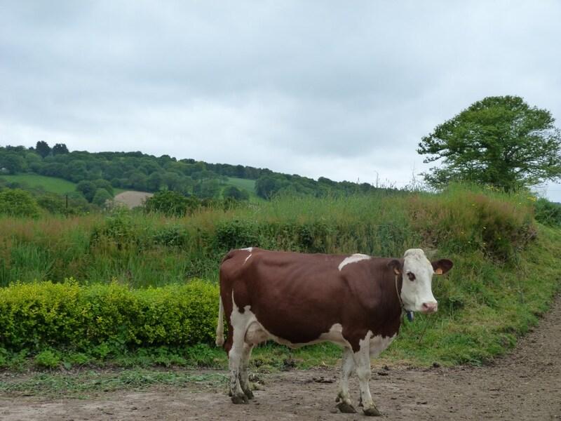 Propriété agricole de 151  m2 - Guingamp (22200)
